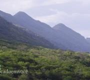 caatinga-verde