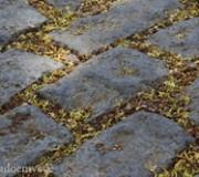 flores-do-tamarindo-8