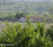 sertao-verde