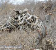 desmatamento-da-caatinga-2
