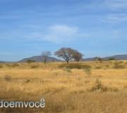 sertao-paisagem