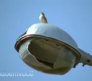 passarinho-cantando