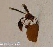 vespa-construtora