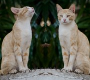 gato-kiko